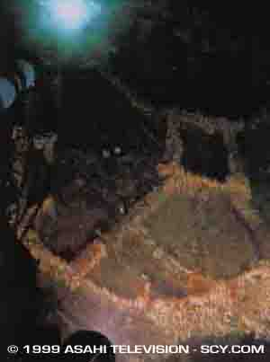 IJN Musashi Wreck Photos http://www.spacecruiseryamato.com/ijn/dive.html